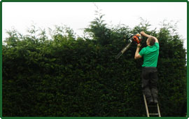 Tree Services cheshire